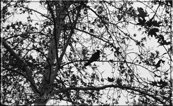 Dans Les Branches