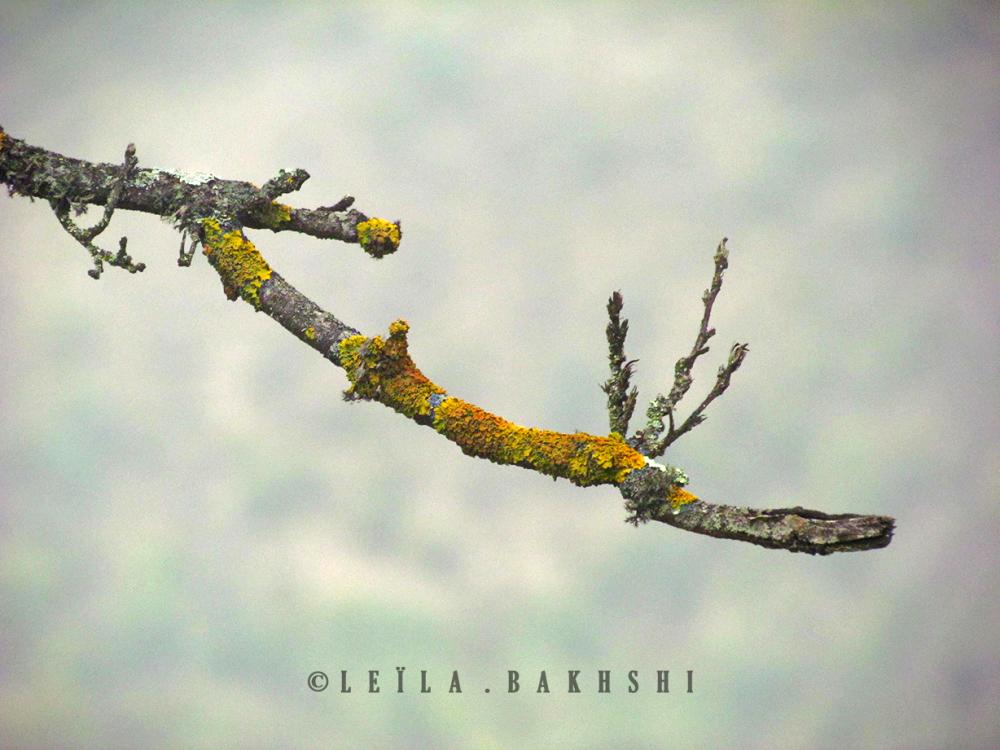 LilyBakhshi