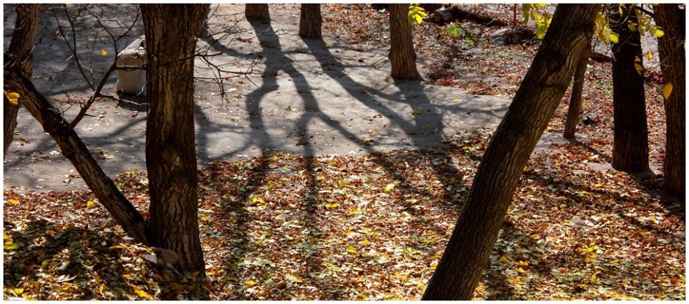 Shadow سایه