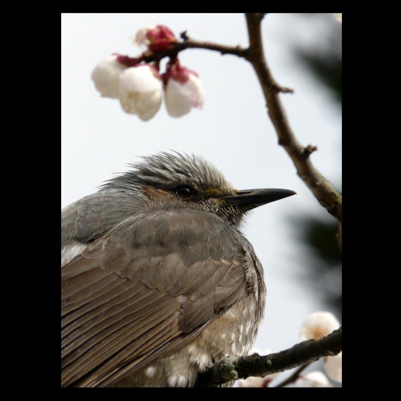 mon oiseau de Arashiyama