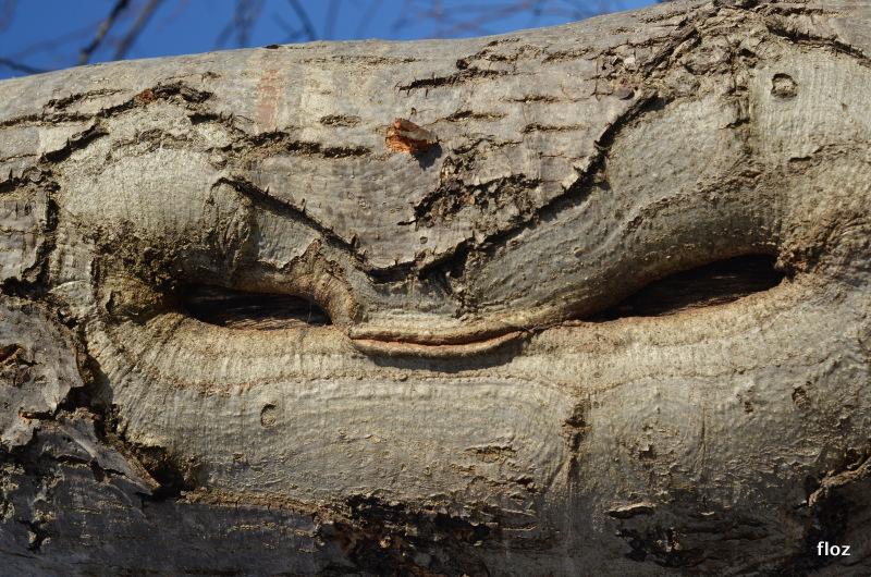 une chouette tête cet arbre!