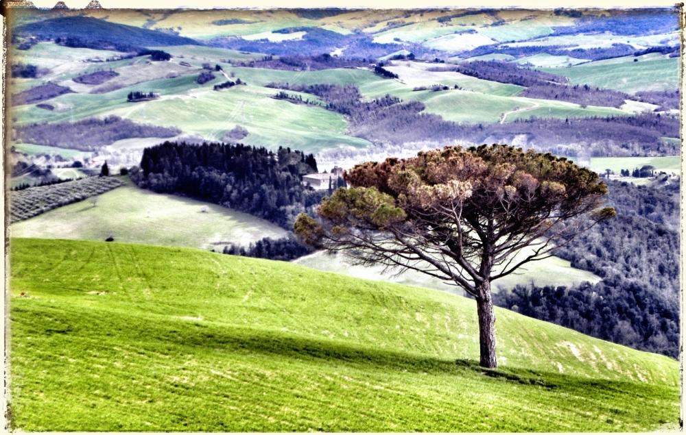 Sur la route où vont les arbres...