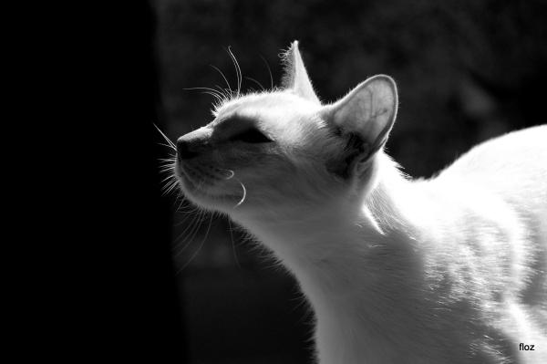 chat du maquis