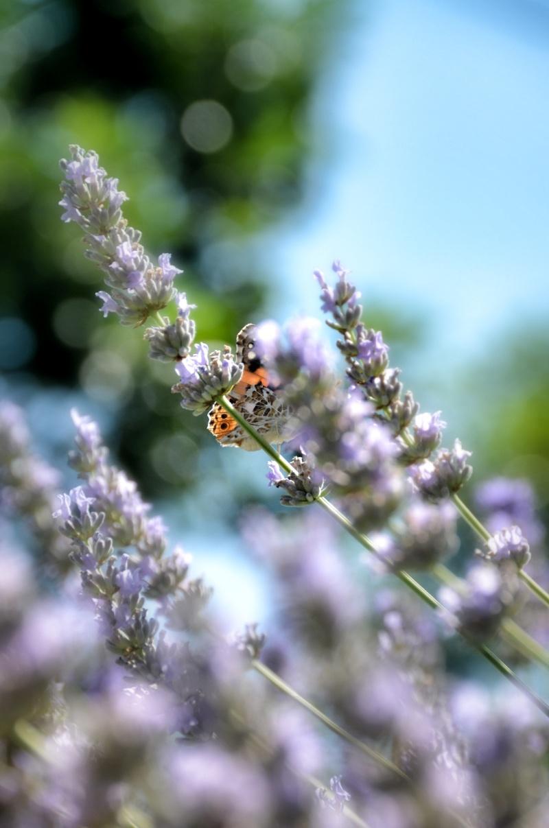 farfalla nello stomaco