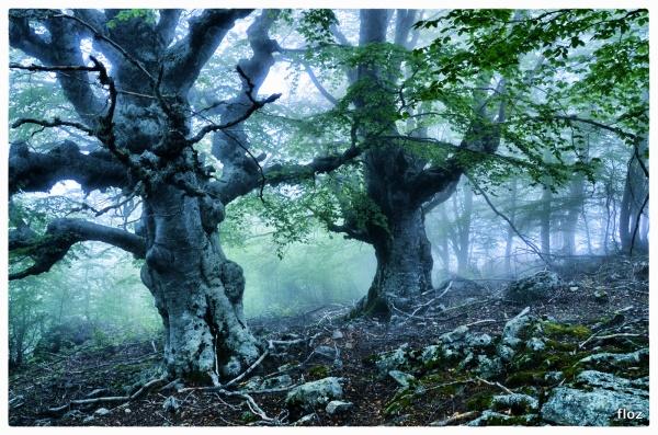 la forêt enchantée