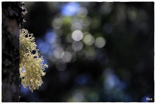 mais un lichen!