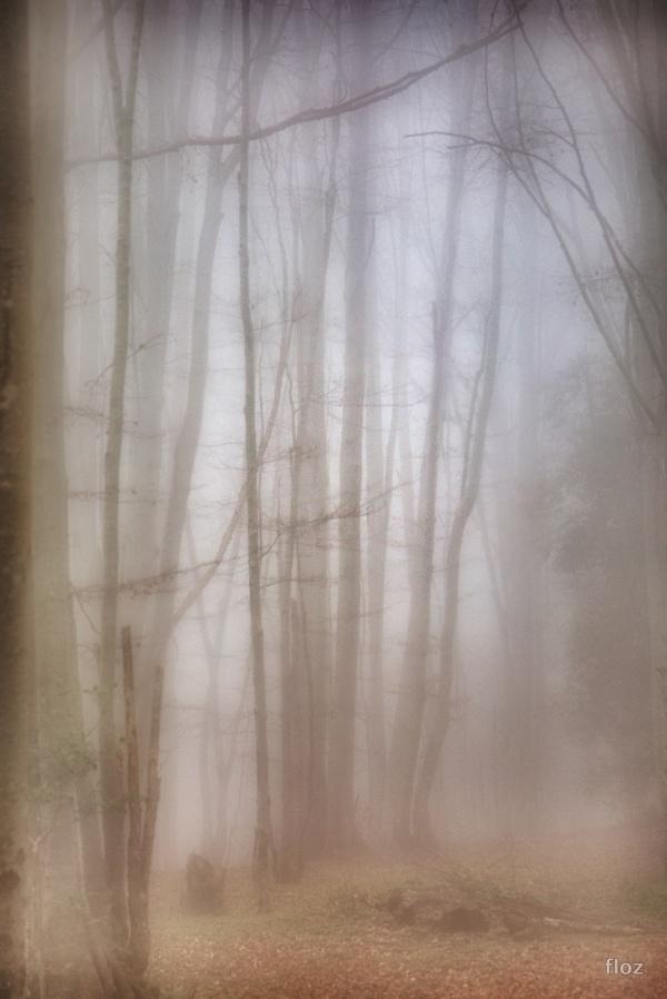 automne, ô ma saison mentale