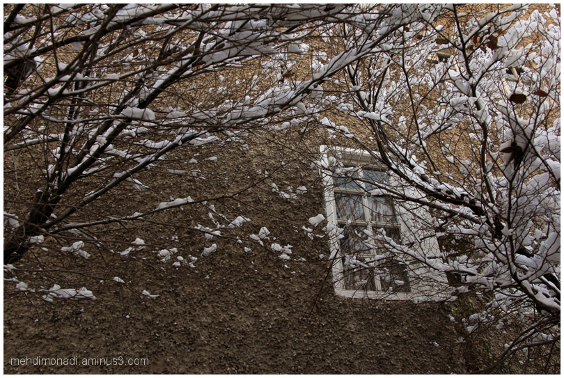 window,snowy branches