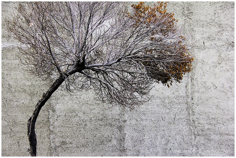 tree Cement wall