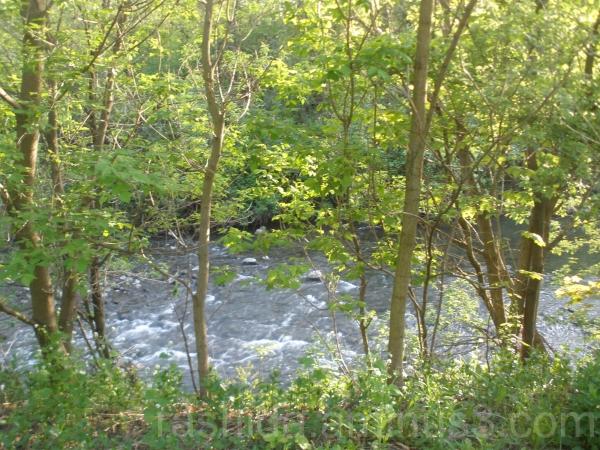 Rainy Day Water Rushing in Wilket Creek