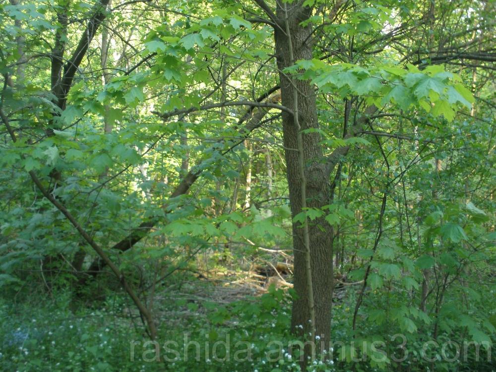 Walking in Wilket Creek Park