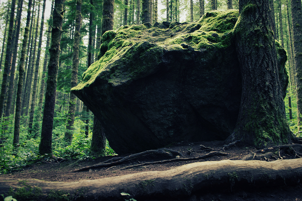 Big Rock in the Forest