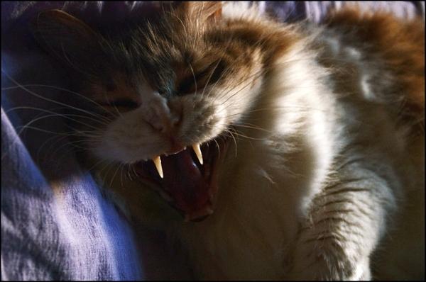 Mon chat se prend pour un vampire!