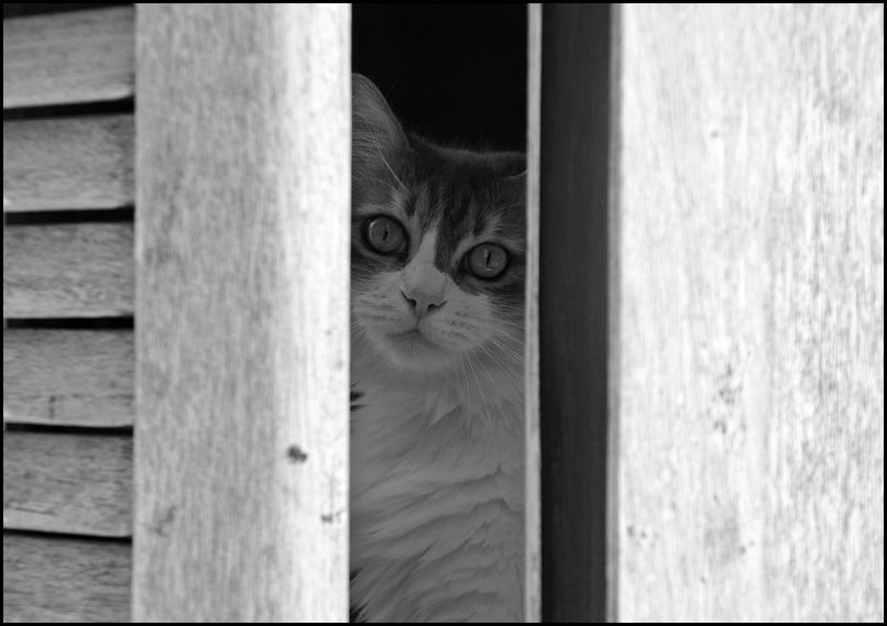 Mon chat...