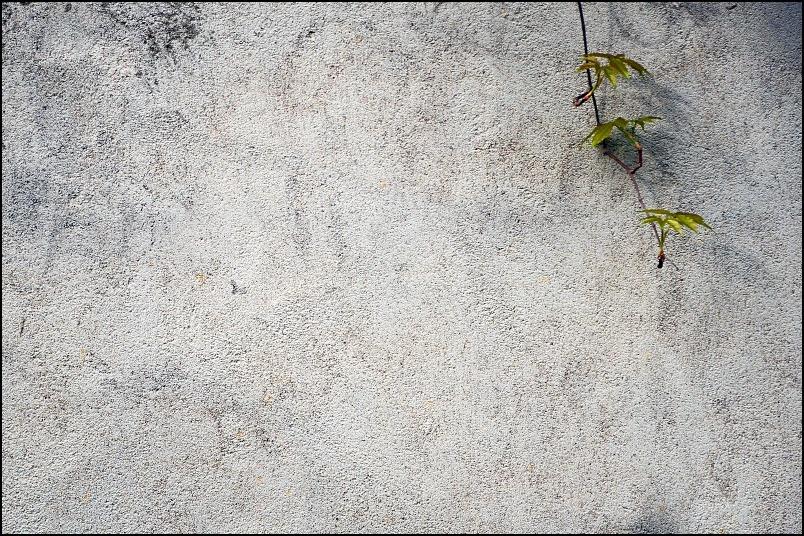 Le mur et la vigne.