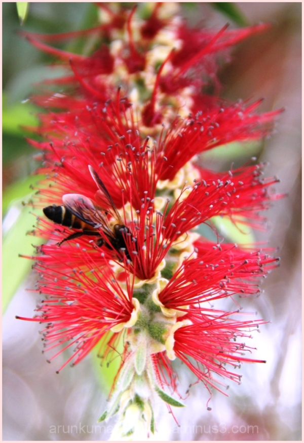 Bottle brush with Bee