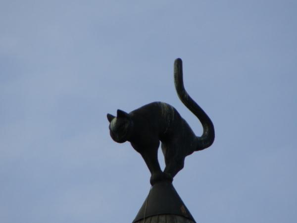 spacial cat