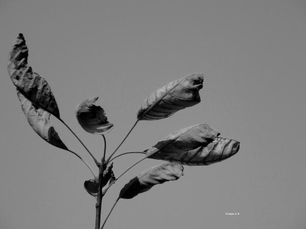 La valse des feuilles mortes