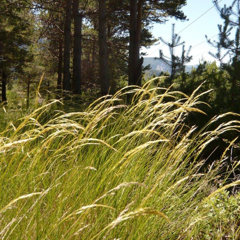 Lumière dans les hautes herbes.
