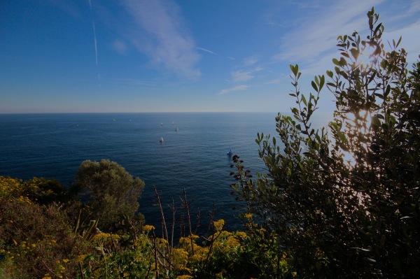 Végétation Maritime.