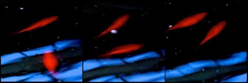 Triptyque Rouge & Bleu sur fond Noir.