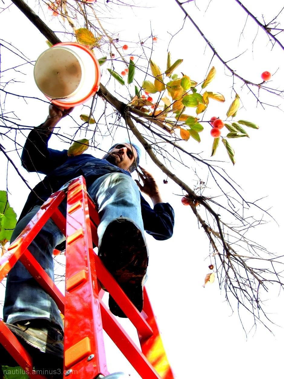 fall in Esfahan