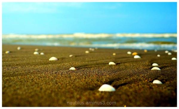 caspain shells