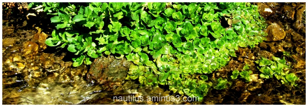 Wet Green