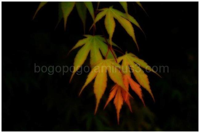 Miksang leaves