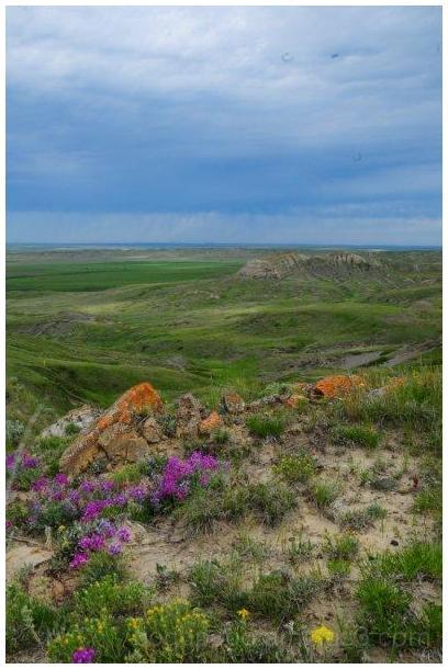 My Prairie 2012