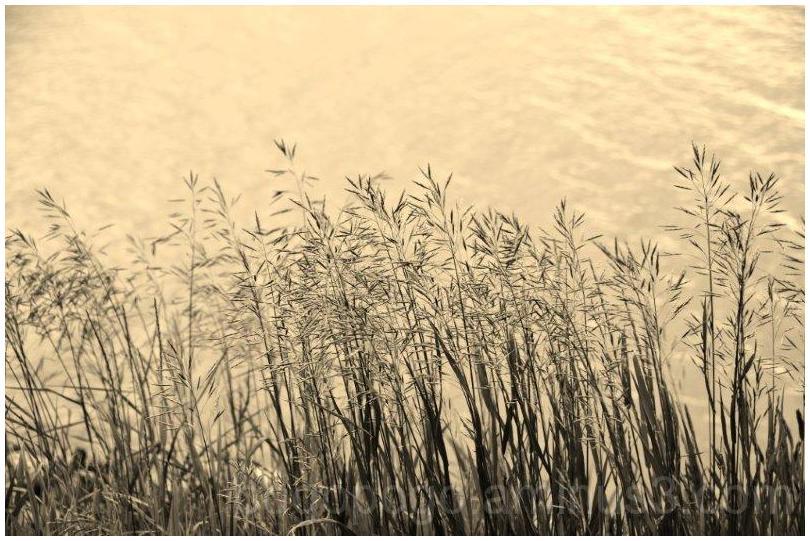 Grass at Grasslands Park