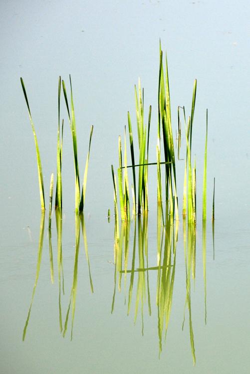 Dans l'étang