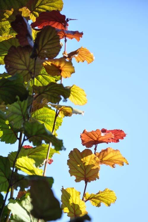 Ca sent l'automne !