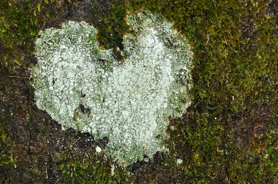 Le coeur de l'arbre