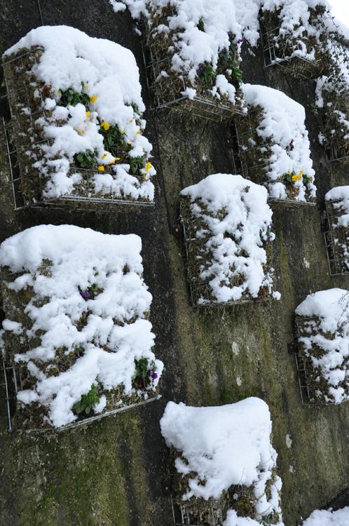 Pensées sous la neige