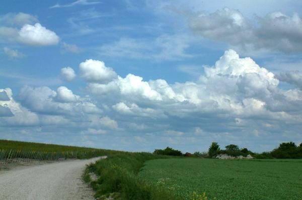 Le chemin vers les vignes