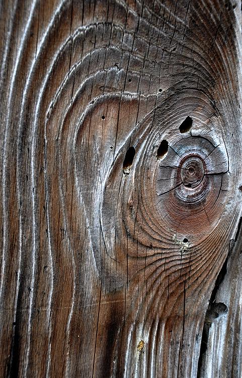 L'oeil du bois