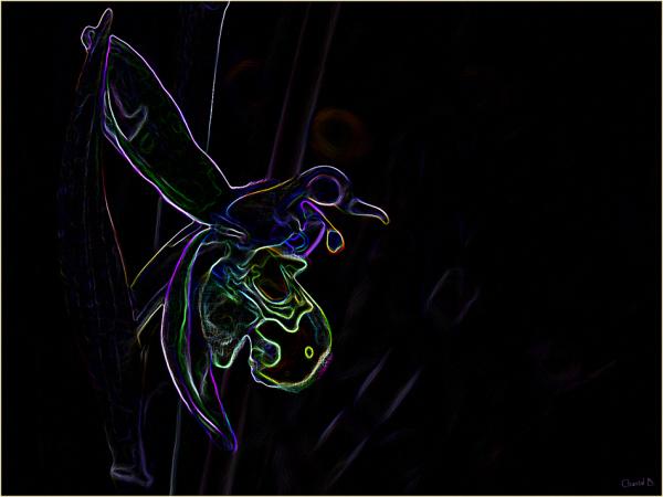 Quand l'ophrys devient oiseau