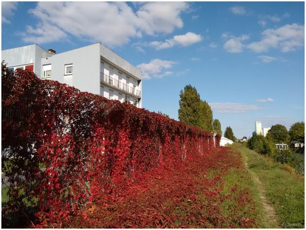 Le mur de feuilles