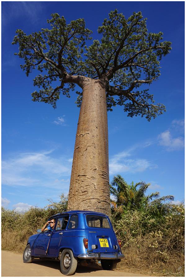 L'est où le baobab ?