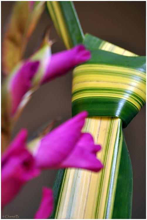 Le noeud (Détail floral)