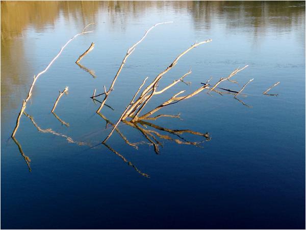 Dans la rivière Marne