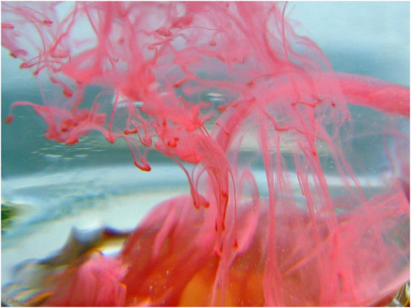 Tsunami de couleur