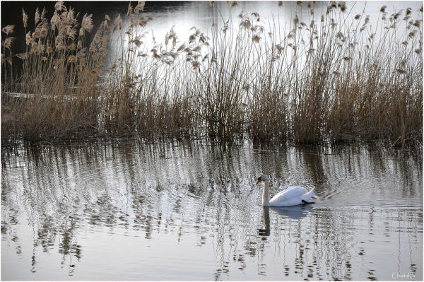 Balade sur l'étang