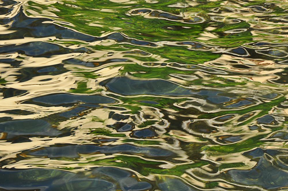 A la surface de l'eau (1)