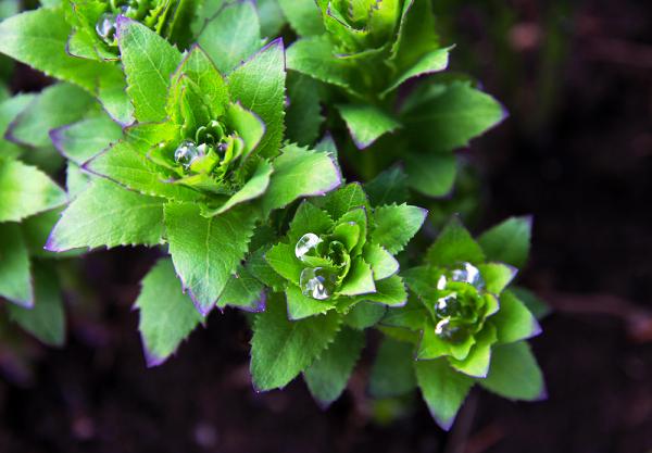 Captée un lendemain de pluie au jardin...