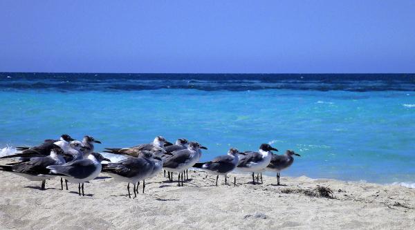 Mouettes sur le point de s'envoler, sur la plage.
