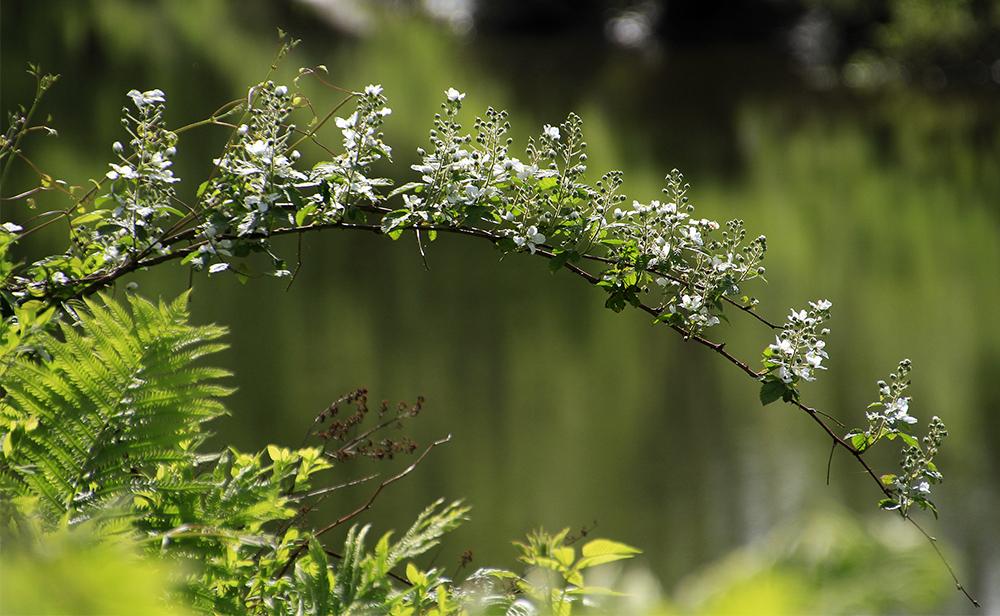 branche fleurie joliment inclinée