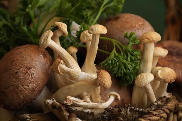 pettis champignons pressés d'aller à la poêle