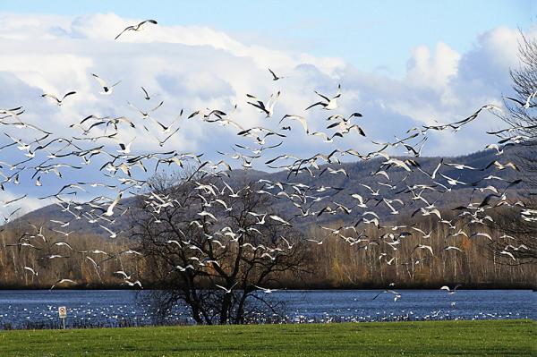 un arbre aux oiseaux